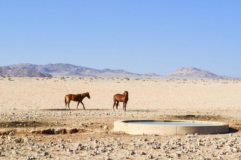 namib-desert-horse-8