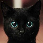 Сонник Кошка, к чему снится Кошка, во сне Кошка