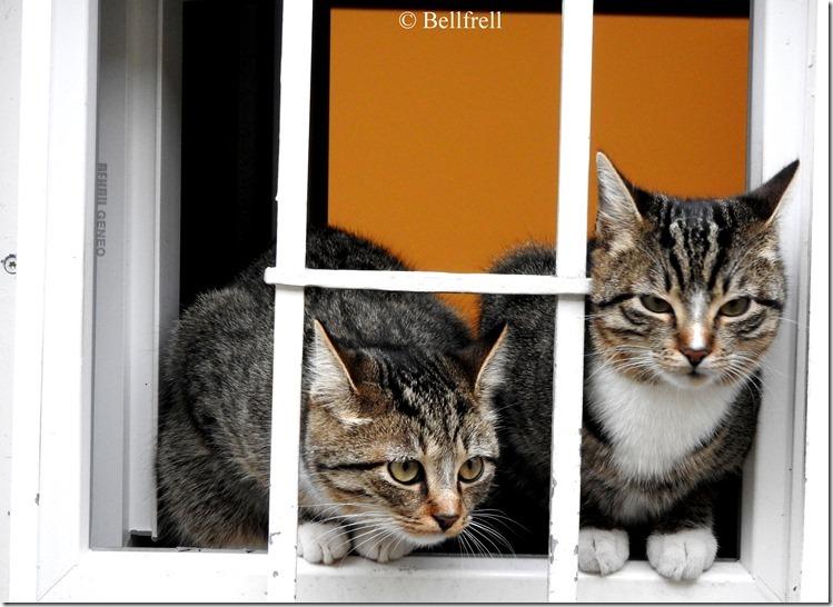 Katzen am Fenster 4