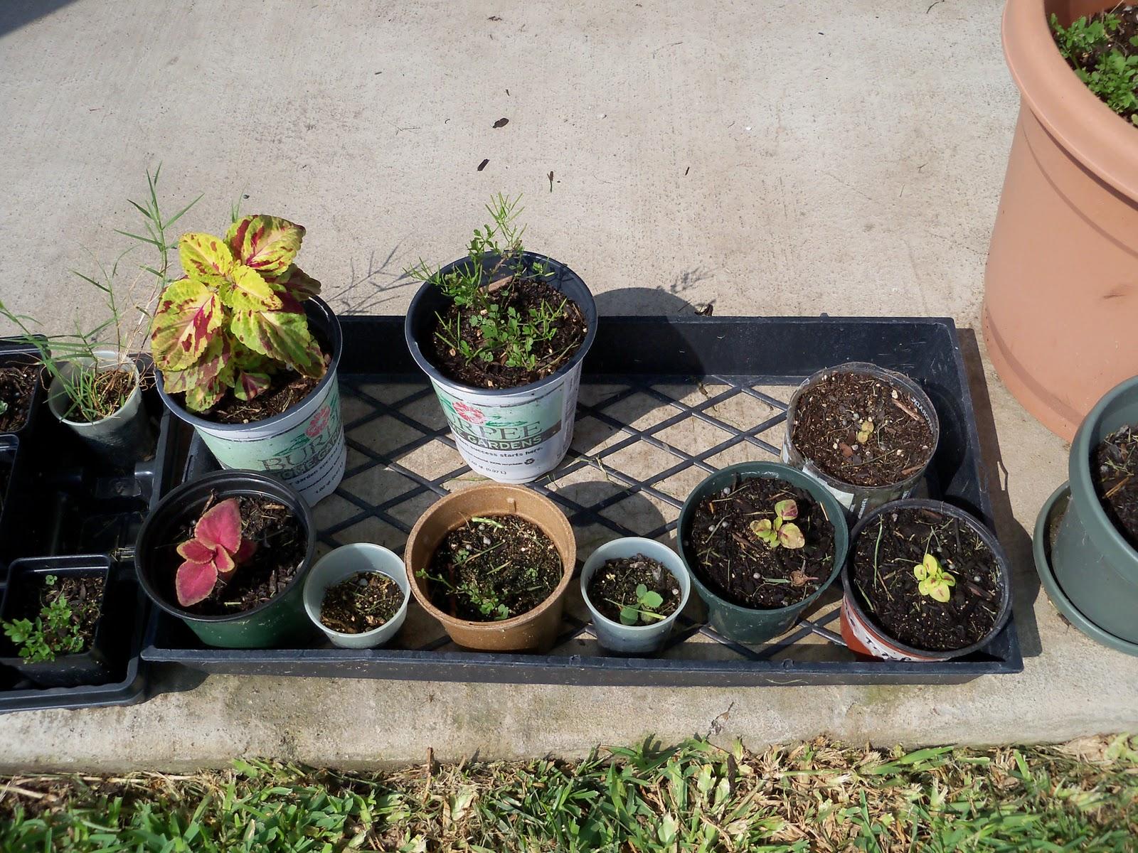 Gardening 2010, Part Two - 101_3442.JPG
