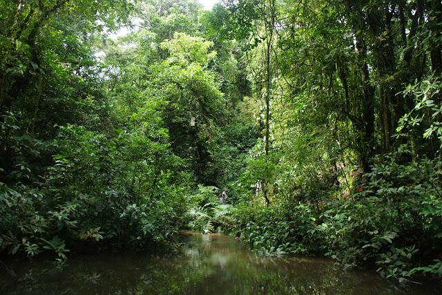 Bosque Bavaria (Villavicencio, Meta, Colombie), 9 novembre 2015. Photo : J.-M. Gayman