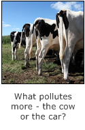 what pollutes more - the cow or the car