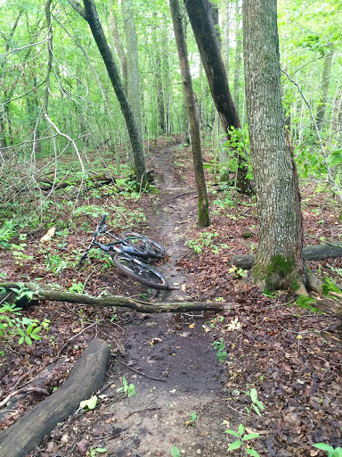 Clearing deadfall