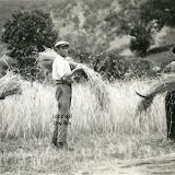 1936-moissonneurs.jpg