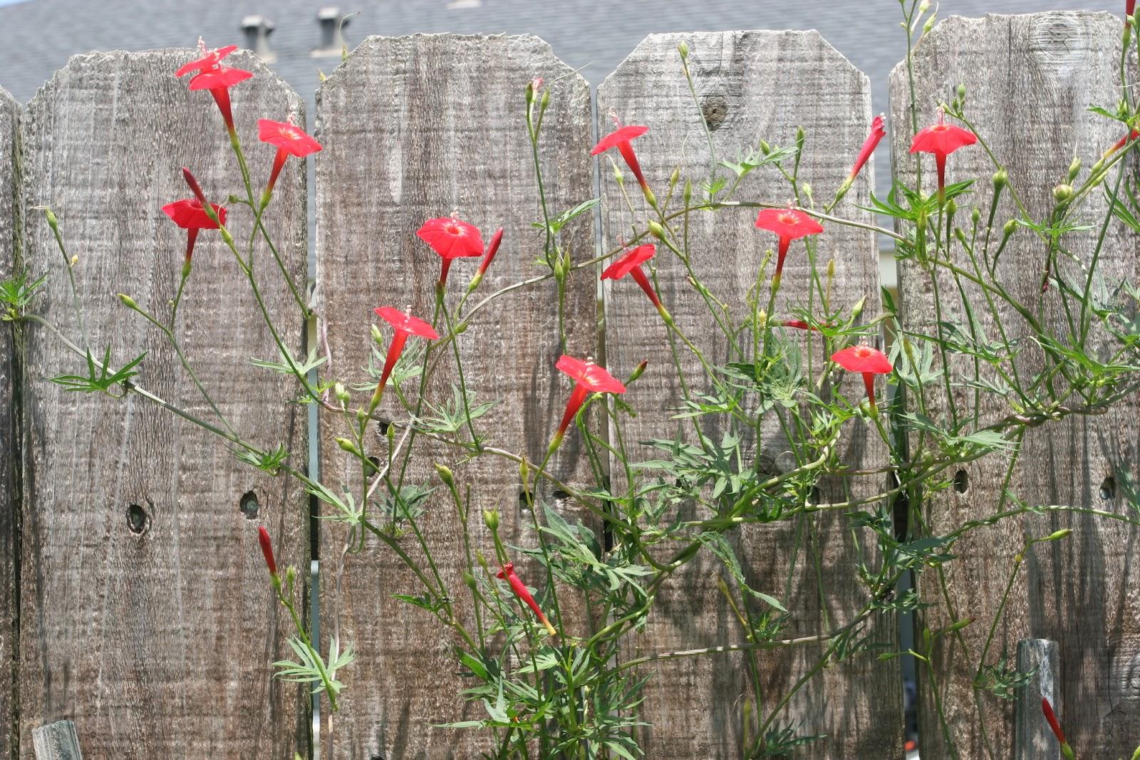 Gardening 2012 - IMG_3841.JPG