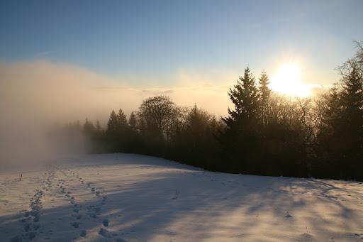 Na úrovni hmly