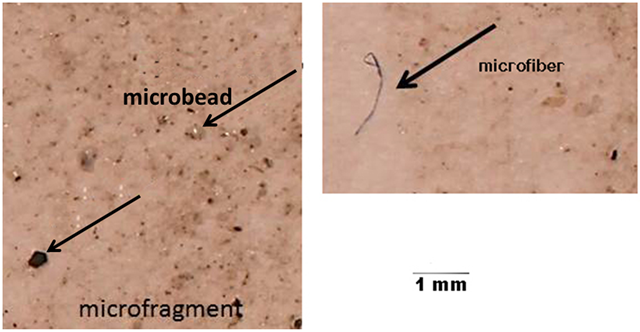 Examples of the types of microplastics recovered from sediments of a key shellfish growing region of Canada, Lambert Channel and Baynes Sound, British Columbia. Photo: Kazmiruk, et al., 2018 / PLOS ONE