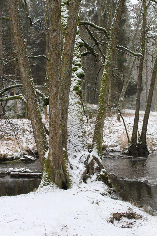 01. Januar 2016: Neujahrswanderung ins Waldnaabtal - IMG_1545.JPG