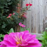 Gardening 2012 - 115_1985.JPG