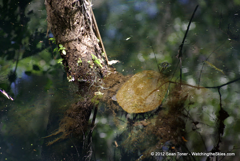 04-04-12 Hillsborough River State Park - IMGP4416.JPG