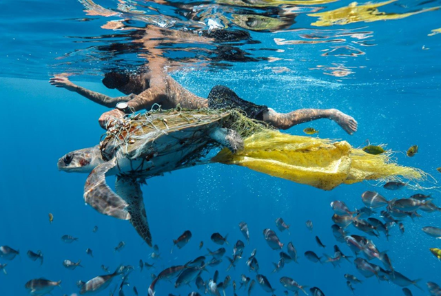'Save Turtle' by Jing Li, taken in Sri Lanka in 2018, shows the moment when his group of divers found a young turtle caught in a net bag when they were searching for whale in Trincomalee. The turtle was flapping its flippers for help and a free-diver rescued it. The image was highly commended by the panel of CIWEM judges  Photo: M Yousuf Tushar / CIWEM