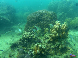 family trip pulau pari 140716 GoPro 33