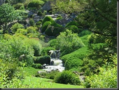 171109 040 Cowra Japanese Gardens