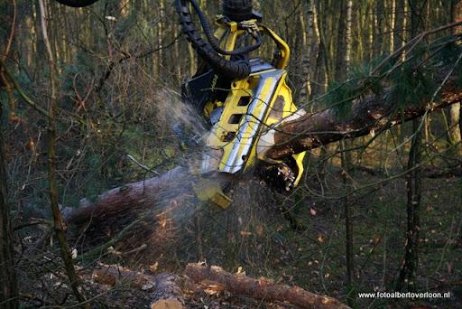 Houtoogst in de bossen van overloon 17-01-2012 (9).JPG