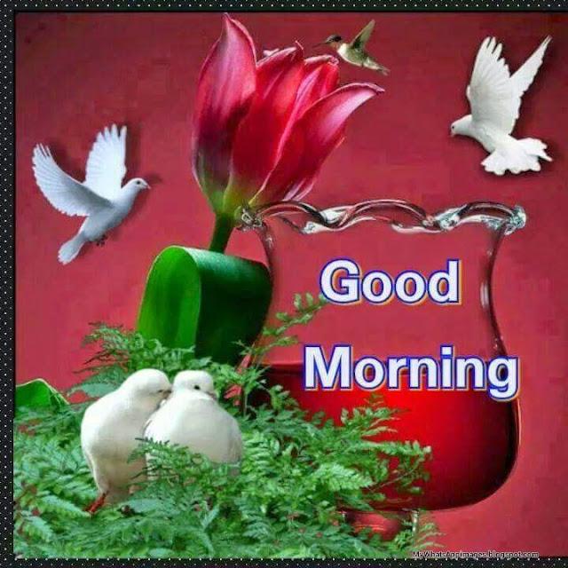 Good Morning Wording Wishes Beautiful Image