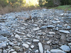 Creek bed close to Coyote Creek Entrance