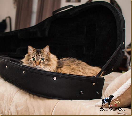 Wordless Wednesday August 29th Matilda in Guitar Case (©Jenny @ Bell Fur Zoo)