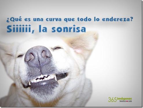 perro-sonriendo-con-una-frase