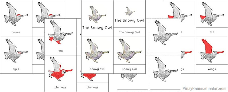 Europe Continent Red Fox and Snowy Owl Nomenclature Cards