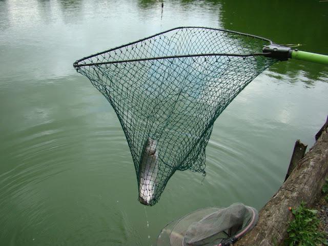 Pêche Chez Lucien - DSC07539.JPG