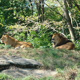 Pittsburgh Zoo Revisited - DSC05106.JPG