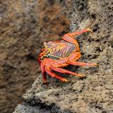 galapagos - Galapagos_FB_2-108.jpg