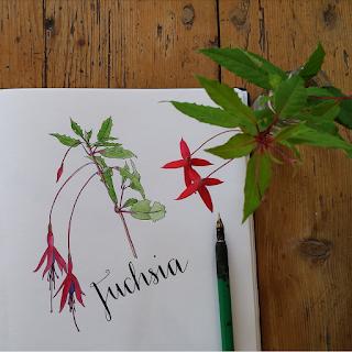 www.AliceDrawsTheLine.co.uk :: Fuchsia