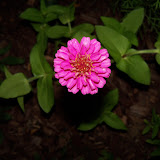 Gardening 2010, Part Two - 101_2522.JPG