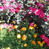 Gardening 2013 - IMG_20130413_110440.jpg