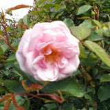 Gardening 2014 - 0405102912.jpg