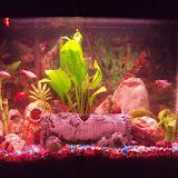 Fish - 100_2946.JPG