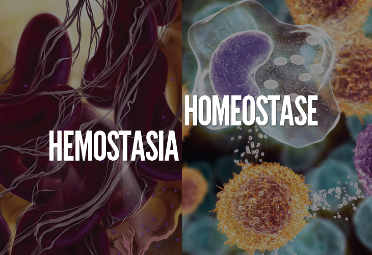 Hemostasia e Homeostase