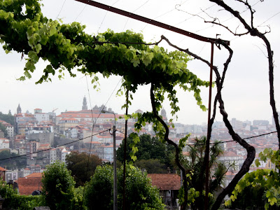 Vines in Vila Nova de Gaia Portugal