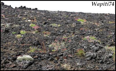 Un tour  d'Islande, au pays du feu... et des eaux. 11quater-Saxholl