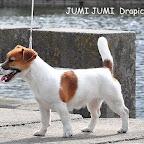 jum_cop (1).jpg
