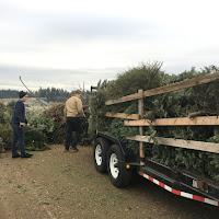 Christmas Tree Pickup - January 2017 - IMG_6998.JPG