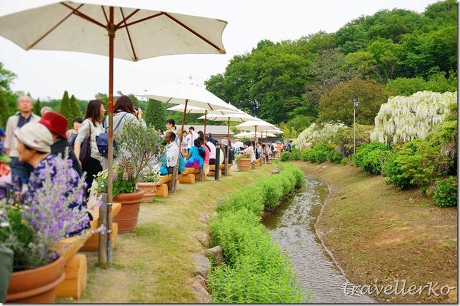 在最美的季節遇見足利紫籐花卉公園:門票交通攻略實況(下)14