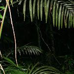 southamerica-2-155.jpg