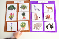 Plants versus Animals Sorting Activity