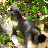 2007-02-01 Hike Cahuita - PICT3208.JPG