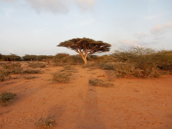 Djibouti - Refuge Decan