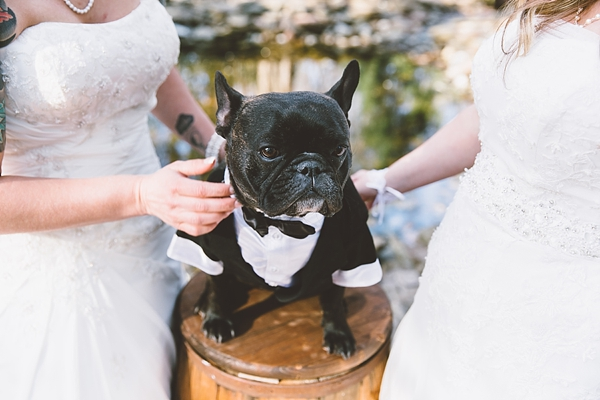 wedding dog in little tuxedo virginia beach