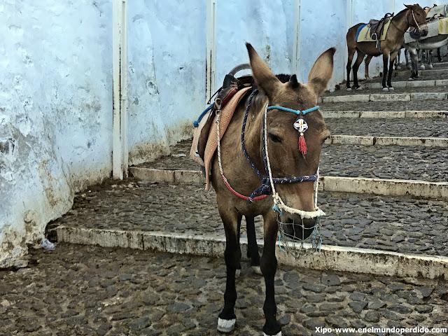 burro-fira-santorini.JPG