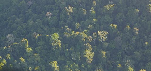 La forêt guyanaise près de Saül. 29 novembre 2011. Photo : J.-M. Gayman