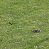 05-11-12 Wildlife Prairie State Park IL - IMGP1567.JPG