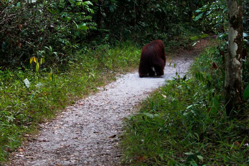 Un macho alfa con el que nos cruzamos por el camino