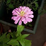 Gardening 2011 - 100_8757.JPG