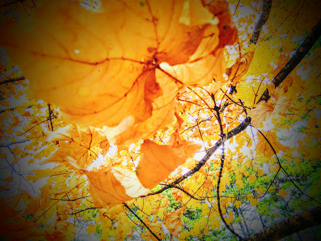 leaves from an autumn tree
