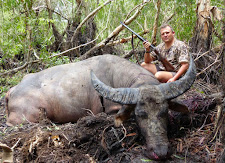 Mr Oyvind Christensen, Norway hunted this old bull in the thickest shit you can ever imagine! Even with a double rifle a wounded bull in this stuff gets fairly interesting... not for the faint hearted! This bull was hit hard and ran into this paperbark swamp, to wait for us. When we walked in... he was ready!