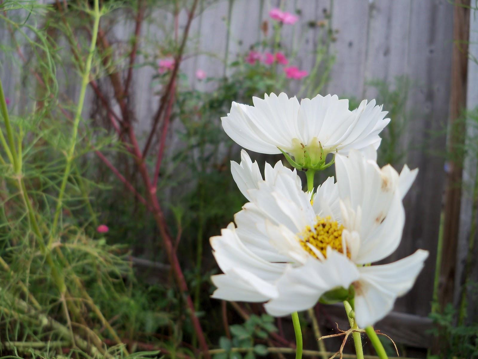 Gardening 2010, Part Three - 101_5171.JPG